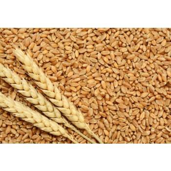 Wheat - 500gm